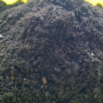 Earthworm Organic Fertilizer